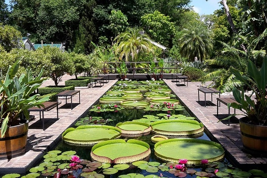 Things to do in Stellenbosch: SU Botanical Garden