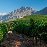 Things to do in Stellenbosch - visit local wine farms